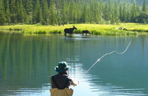 Banff Fishing Trips Banff Fishing Tours Banff Fishing